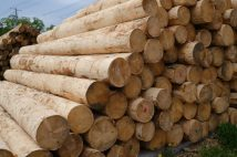 木材価格は株式市場の先行指標としての側面も トレードへの活用方法を解説