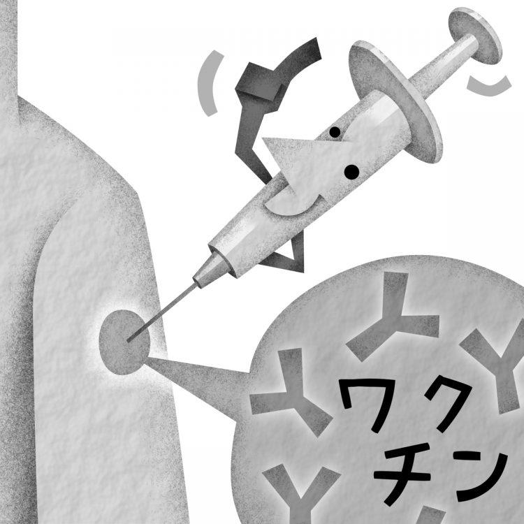 新型コロナウイルス感染後とワクチン接種後の抗体量を比較(イラスト/いかわ やすとし)
