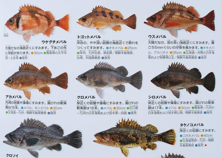 『小学館の図鑑NEO [新版]魚』(2015年刊)