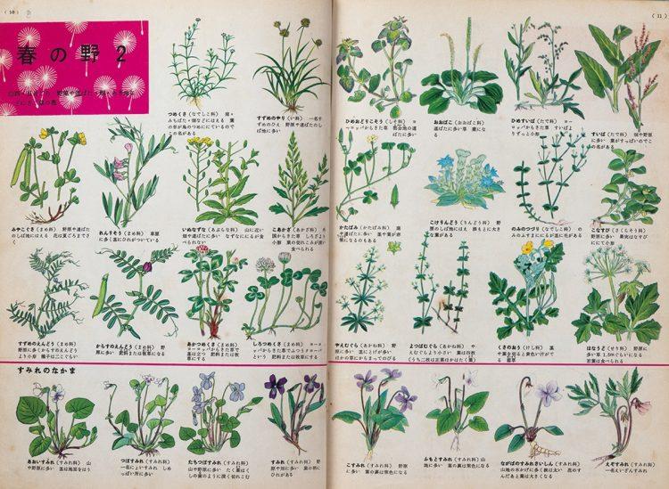 『小学館の学習図鑑シリーズ 植物の図鑑』の「春の野」のページ