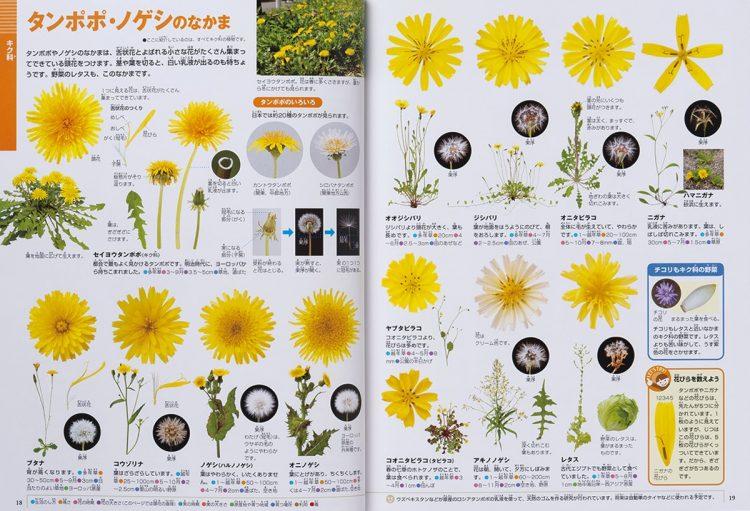 『小学館の図鑑NEO 花』の「タンポポ・ノゲシのなかま」のページ