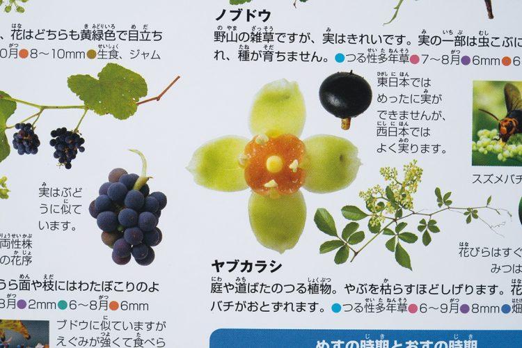 『小学館の図鑑NEO 花』(2014年刊)のヤブカラシの花