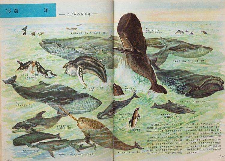『小学館の学習図鑑シリーズ 動物の図鑑』(1958年刊)。クジラのなかまを集めた海洋の画