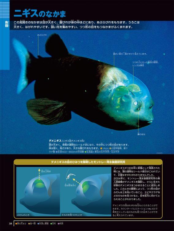 「小学館の図鑑NEOシリーズ」の『深海生物』には、かつては想像図しかなかった深海魚のデメニギスも、生態写真で掲載