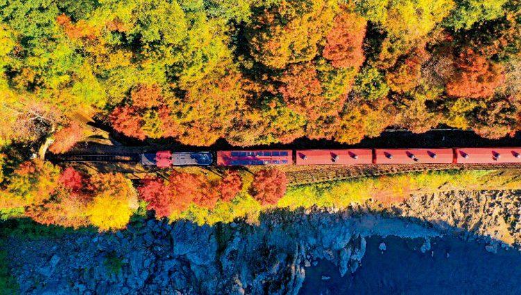 嵯峨野トロッコ列車(写真/嵯峨野観光鉄道)
