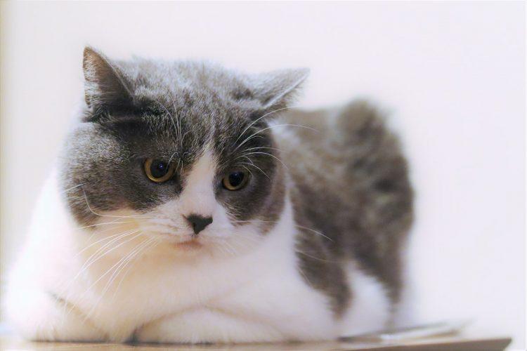 「猫の腎臓病の治療薬研究」が注目を集めている(写真はイメージ)