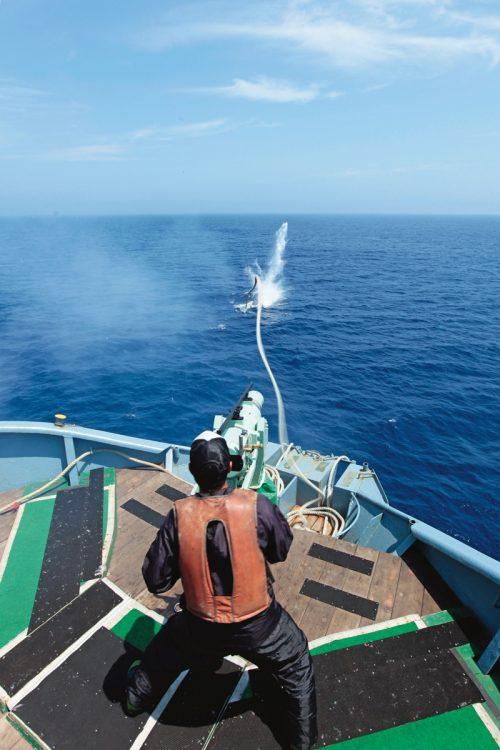 商業捕鯨船の漁師たちを追う