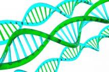 知能だけでなくやる気や集中力にも遺伝が影響 子育ての努力に意味はあるか